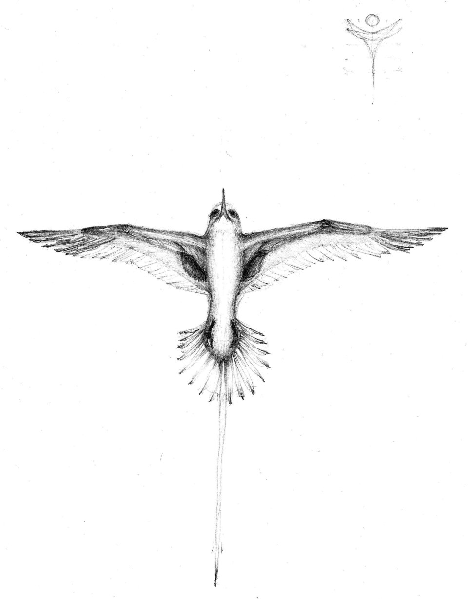 """""""Bermuda Longtail with Peace"""", June 2011"""